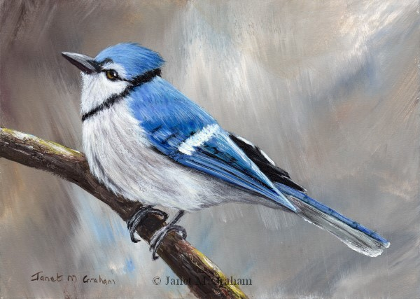 """Blue Jay No 4"" original fine art by Janet Graham"