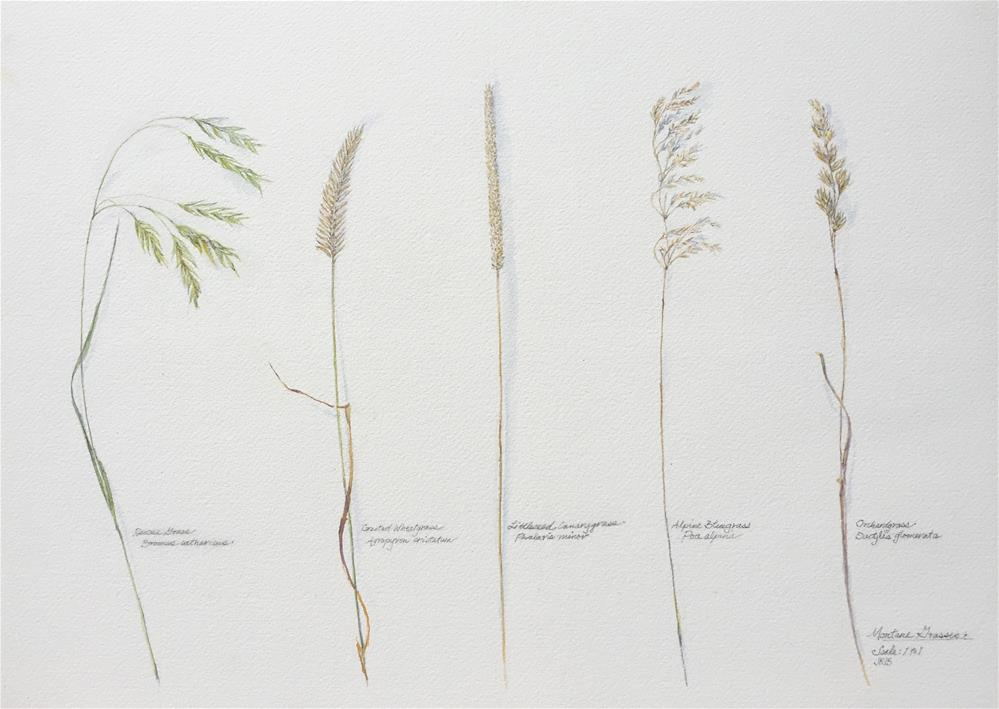 """Montane Grasses"" original fine art by Jean Krueger"