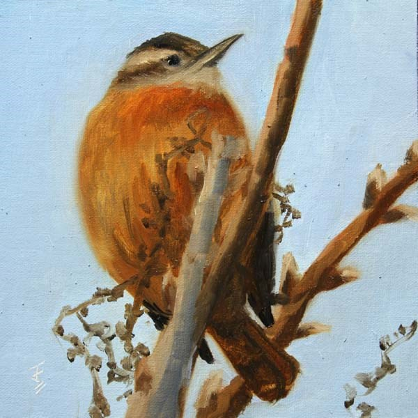 """Name That Bird"" original fine art by Jane Frederick"