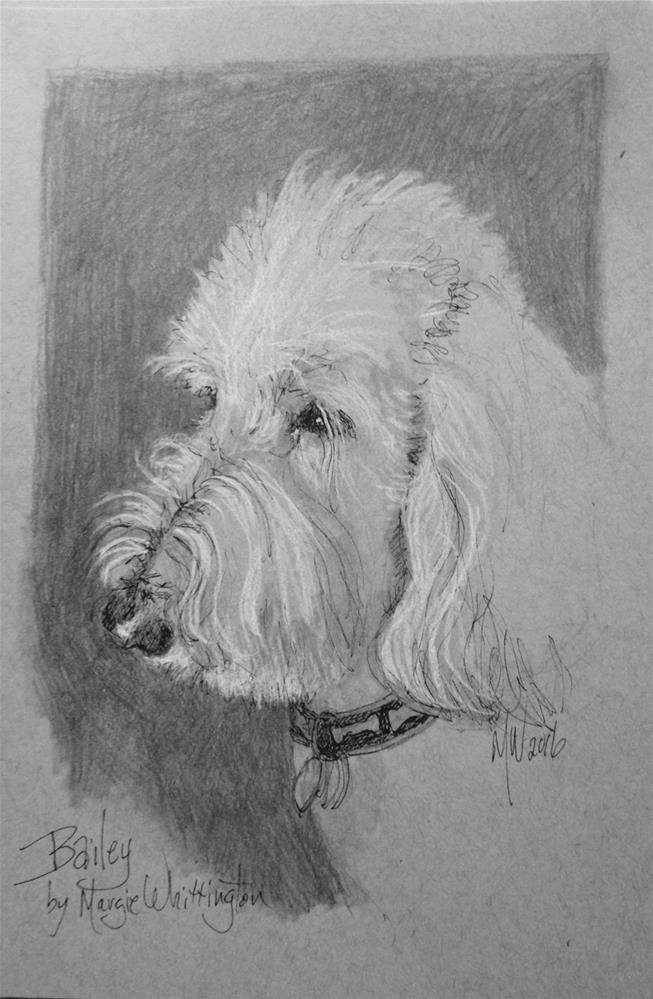 """Baily"" original fine art by Margie Whittington"