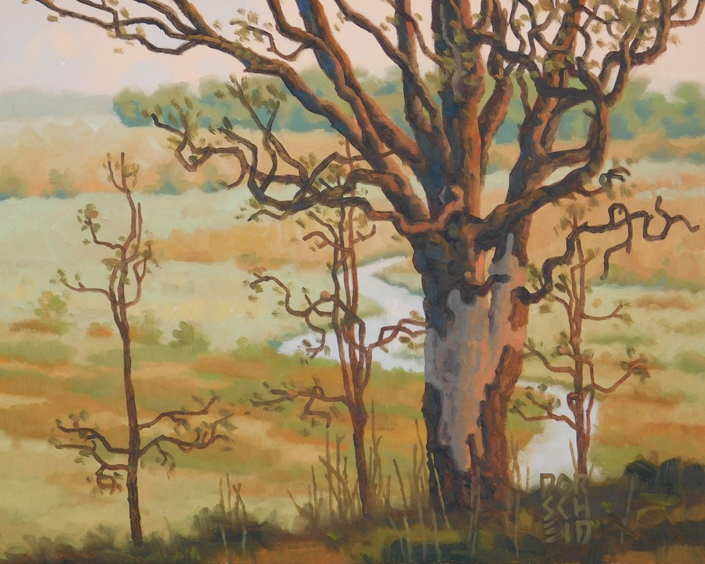 """""""Spring Oak"""" original fine art by Les Dorscheid"""