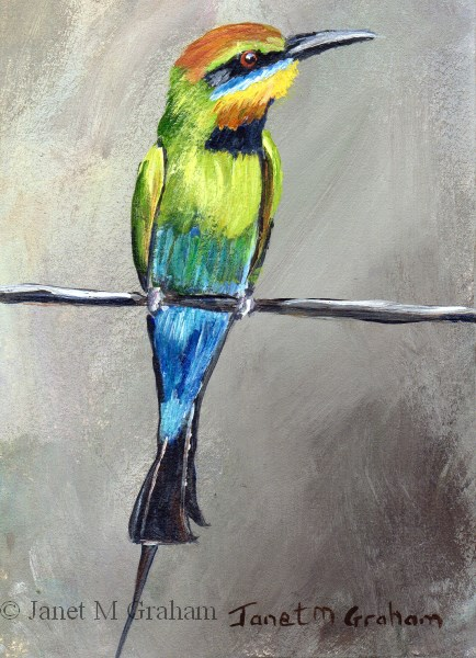"""""""Rainbow Bee - Eater ACEO"""" original fine art by Janet Graham"""