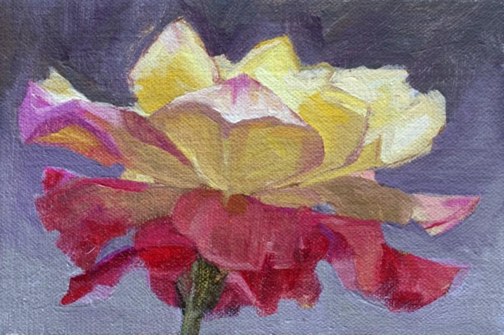 """""""Rose"""" original fine art by Miriam Hill"""