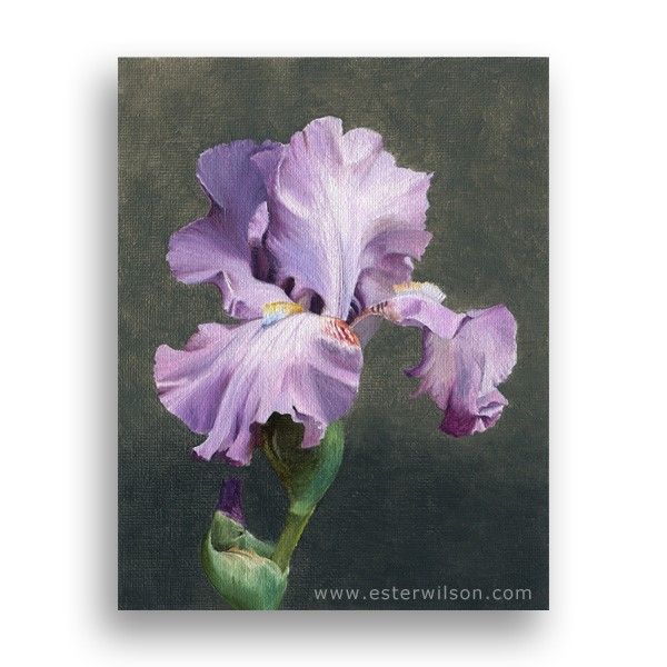 """Purple Iris"" original fine art by Ester Wilson"