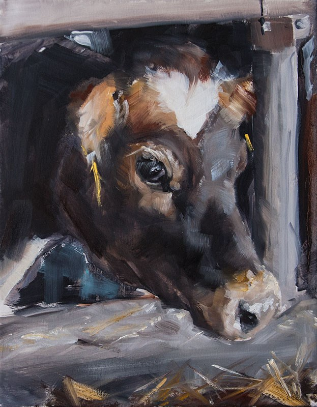 """Dubois Cow"" original fine art by Clair Hartmann"