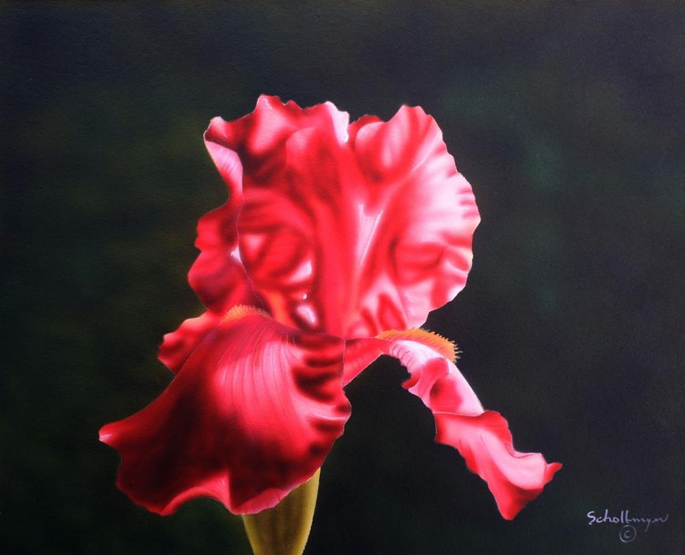 """""""Burgundy Iris"""" original fine art by Fred Schollmeyer"""