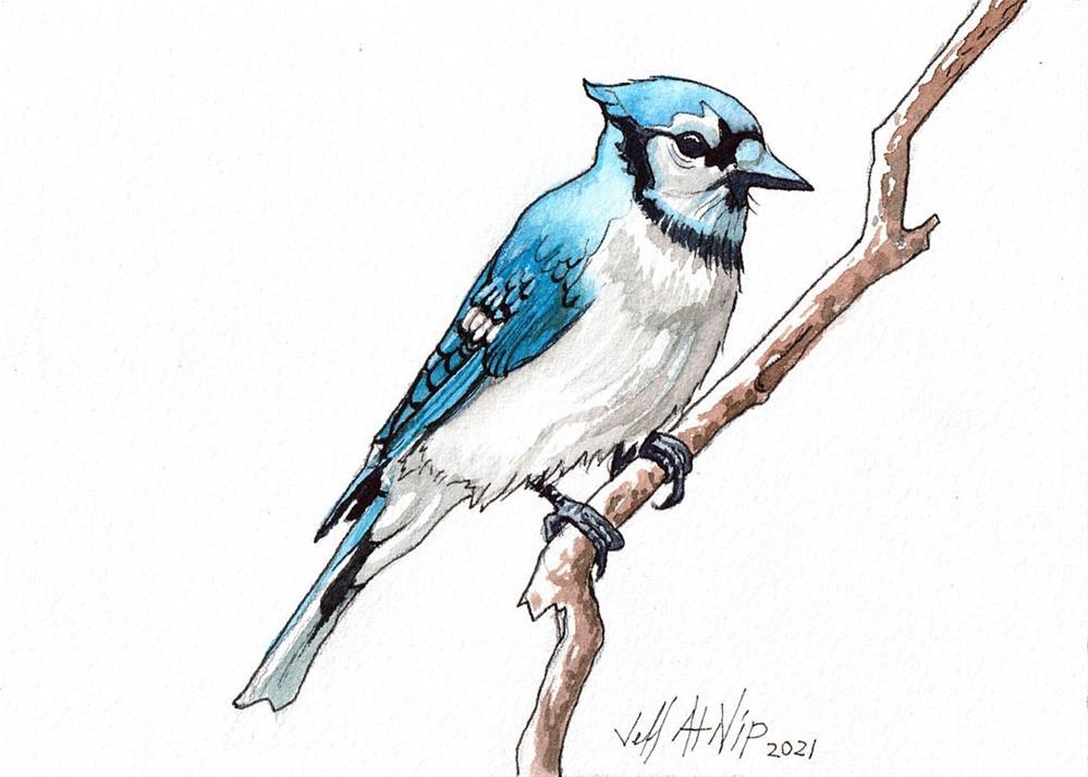 """""""BlueJay"""" original fine art by Jeff Atnip"""