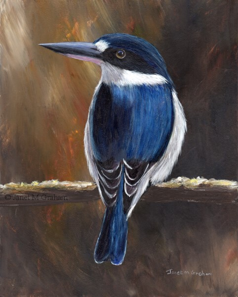 """Forest Kingfisher No 3"" original fine art by Janet Graham"