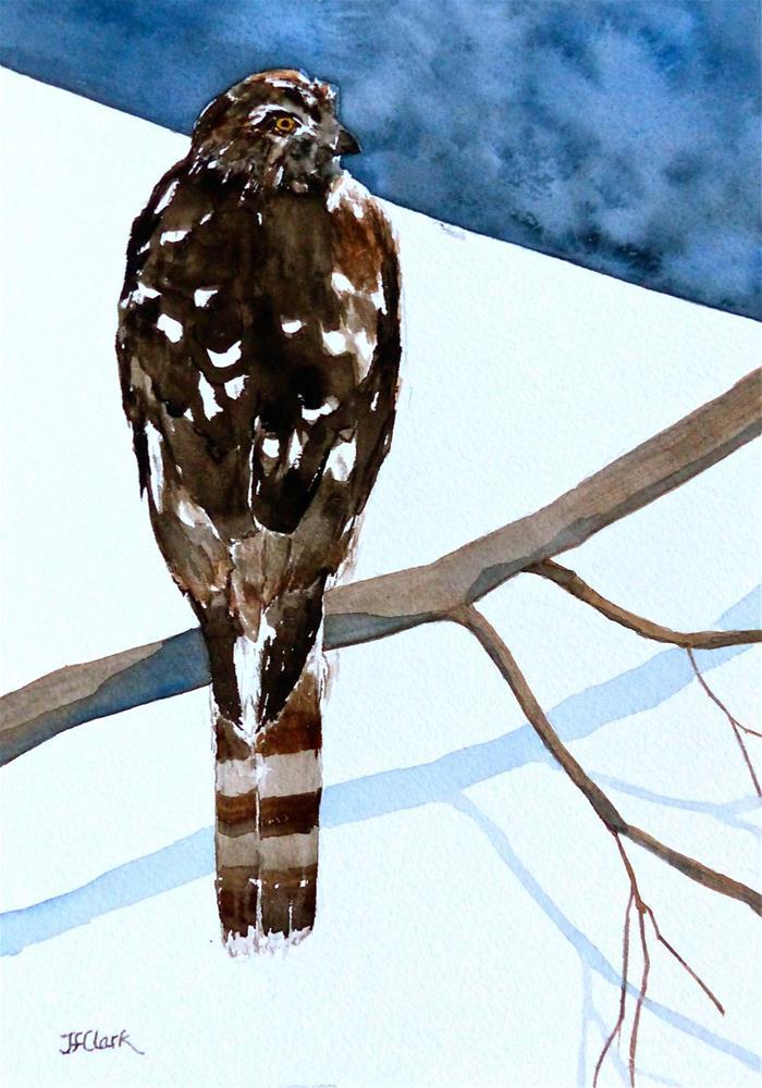 """""""Young Cooper's Hawk"""" original fine art by Judith Freeman Clark"""