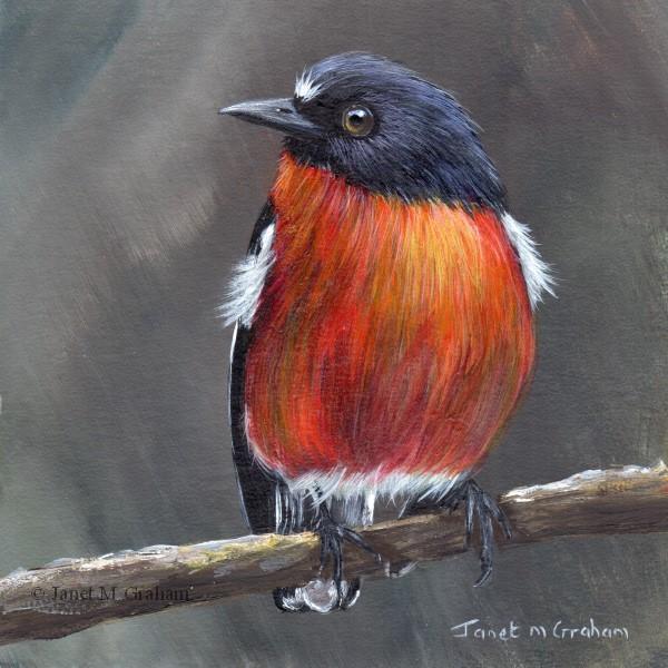 """Flame Robin No 4"" original fine art by Janet Graham"