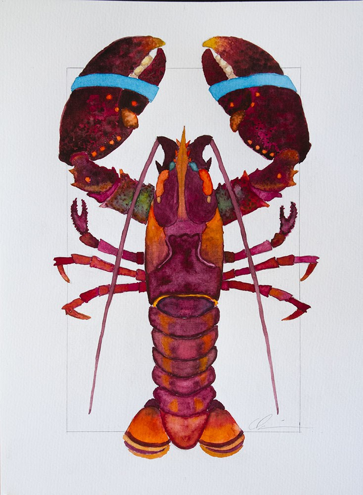 """Red Lobster"" original fine art by Clair Hartmann"