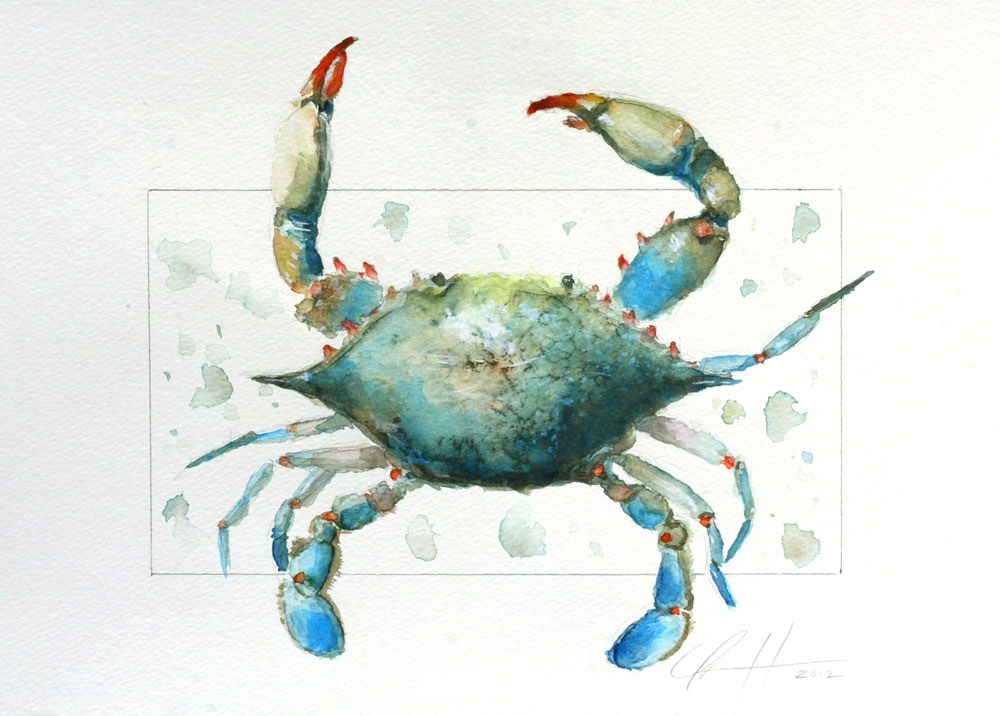 """Blue Crab by Clair Hartmann"" original fine art by Clair Hartmann"