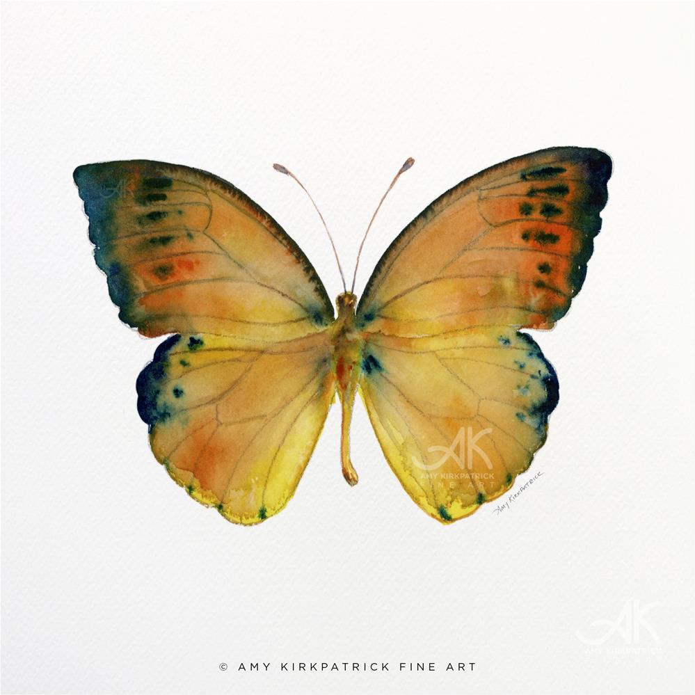 """#53 Leucippe Detanaii Butterfly #0363"" original fine art by Amy Kirkpatrick"