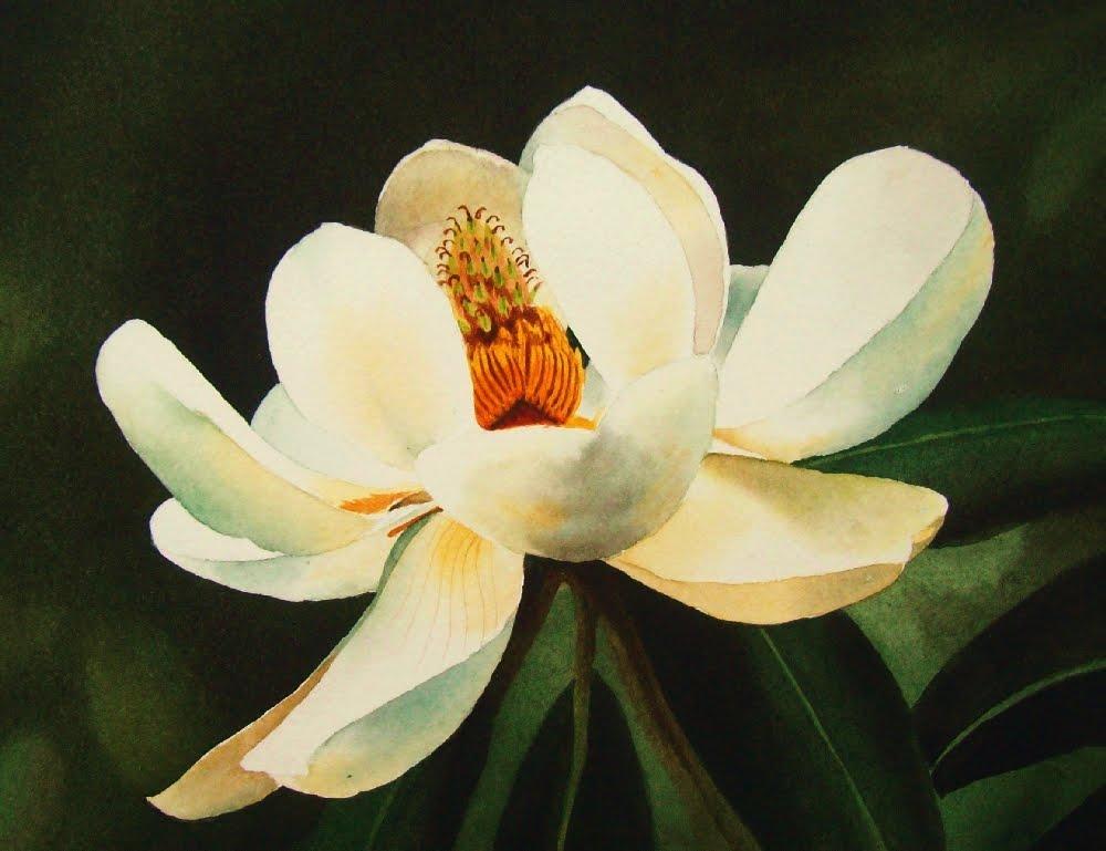 """Southern Magnolia"" original fine art by Jacqueline Gnott, TWSA, WHS"