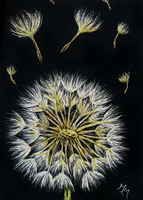 """Dandelion"" original fine art by Monique Morin Matson"