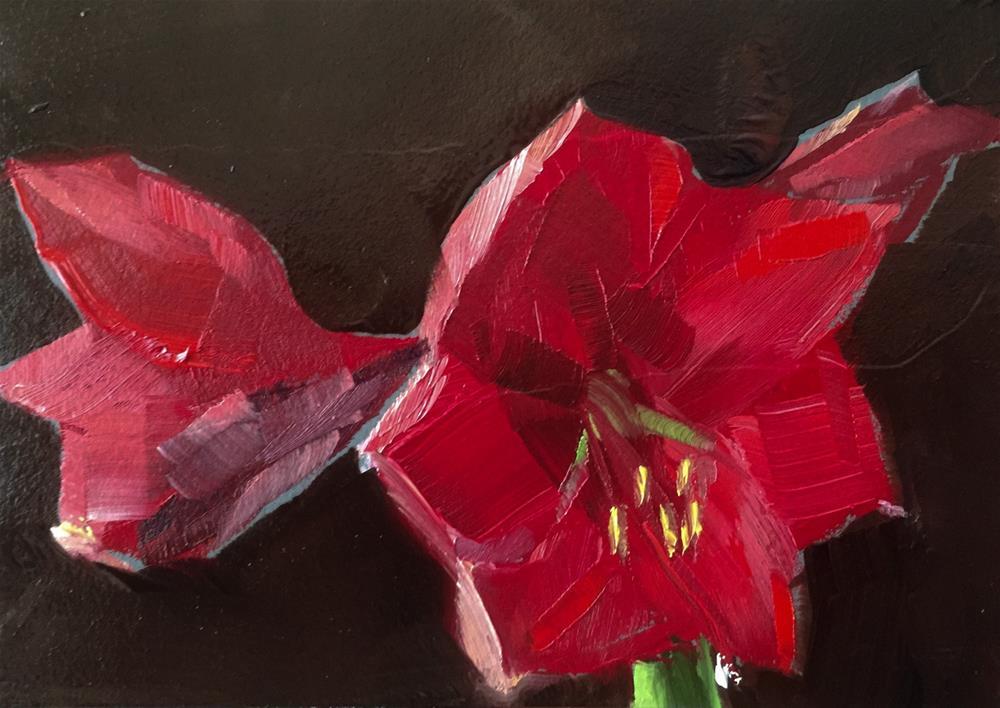 """Amaryllis, Afternoon Light"" original fine art by Gary Bruton"