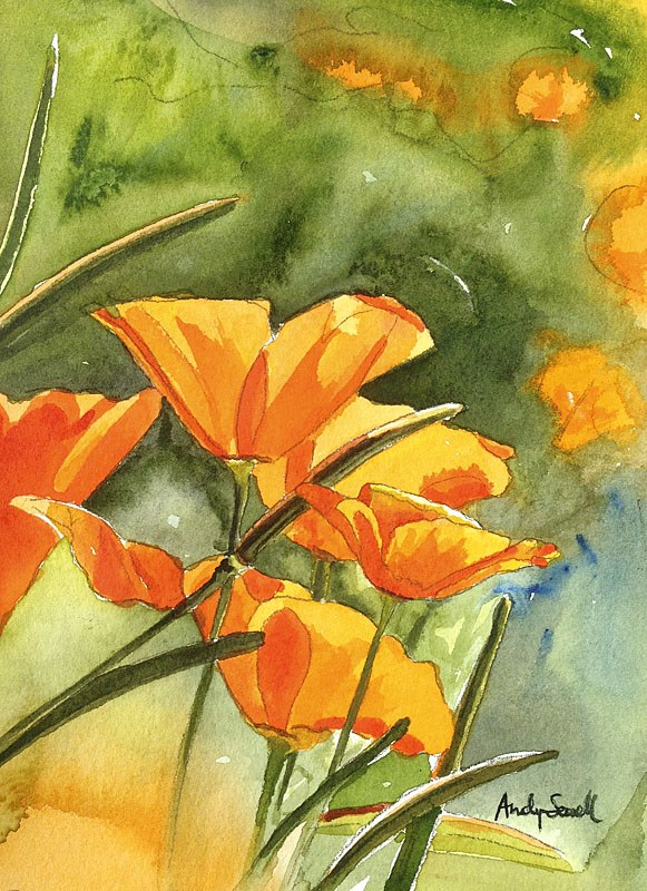 """""""Poppies in the Sun"""" original fine art by Andy Sewell"""