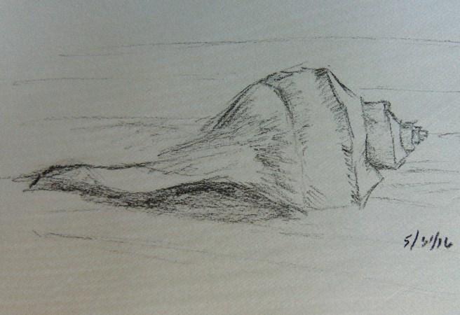 """Seashell"" original fine art by Catherine Kauffman"