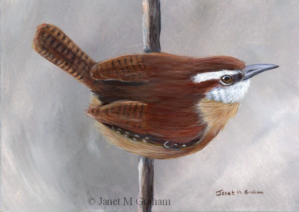 """Carolina Wren No 2"" original fine art by Janet Graham"