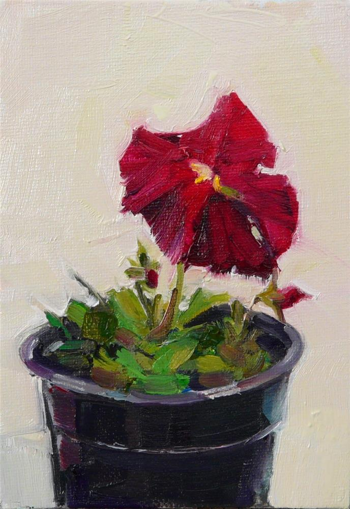 """Maroon Pansy,still life,oil on canvas,7x5,price$150"" original fine art by Joy Olney"