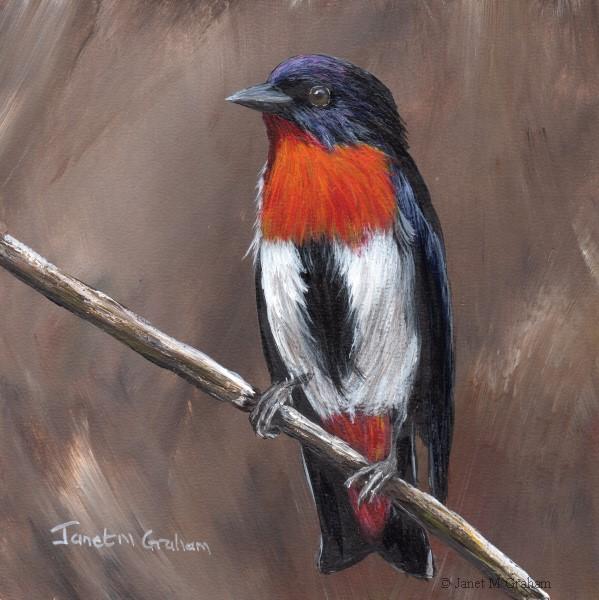 """Mistletoebird No 2"" original fine art by Janet Graham"