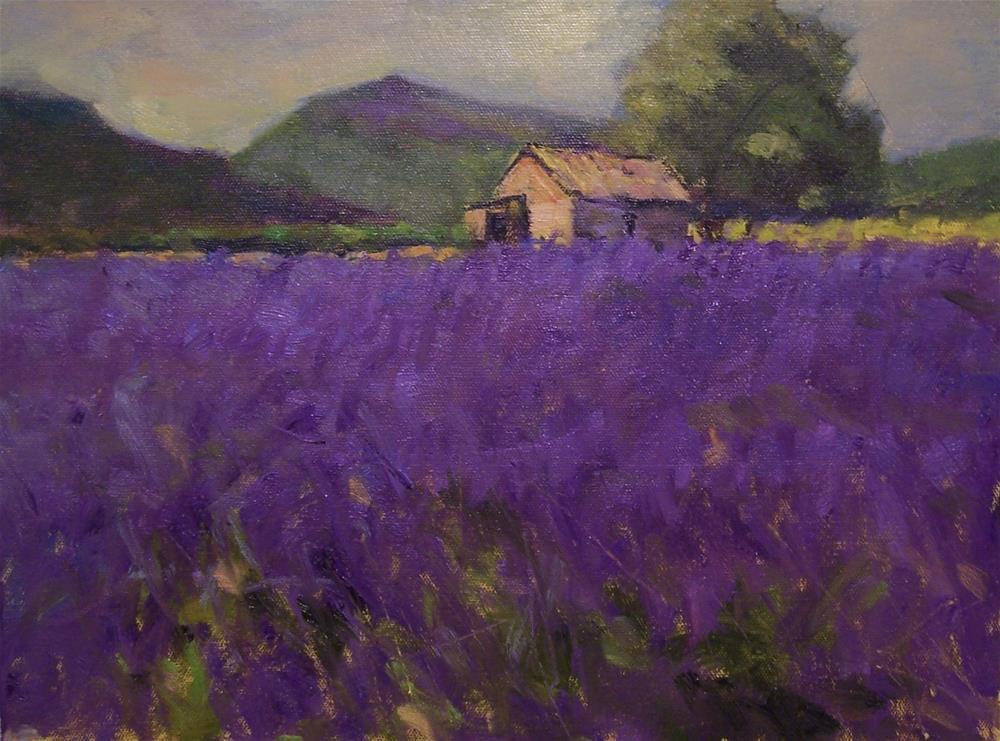 """Lavender fields"" original fine art by John Shave"