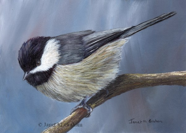 """Carolina Chickadee"" original fine art by Janet Graham"
