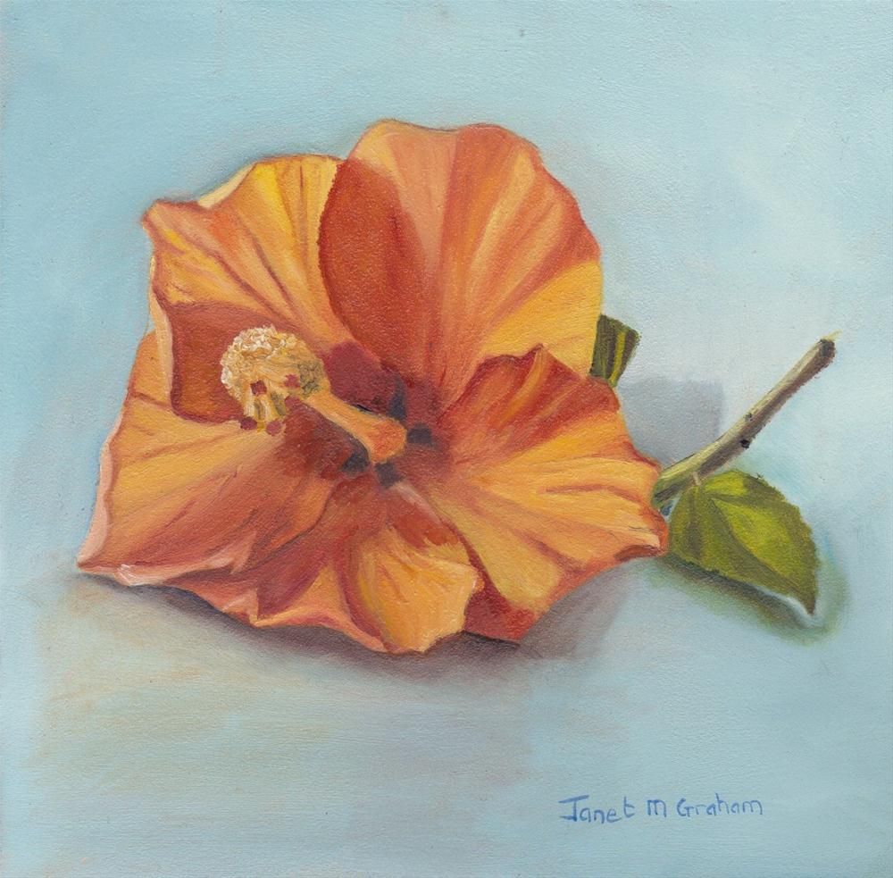 """Hibiscus"" original fine art by Janet Graham"