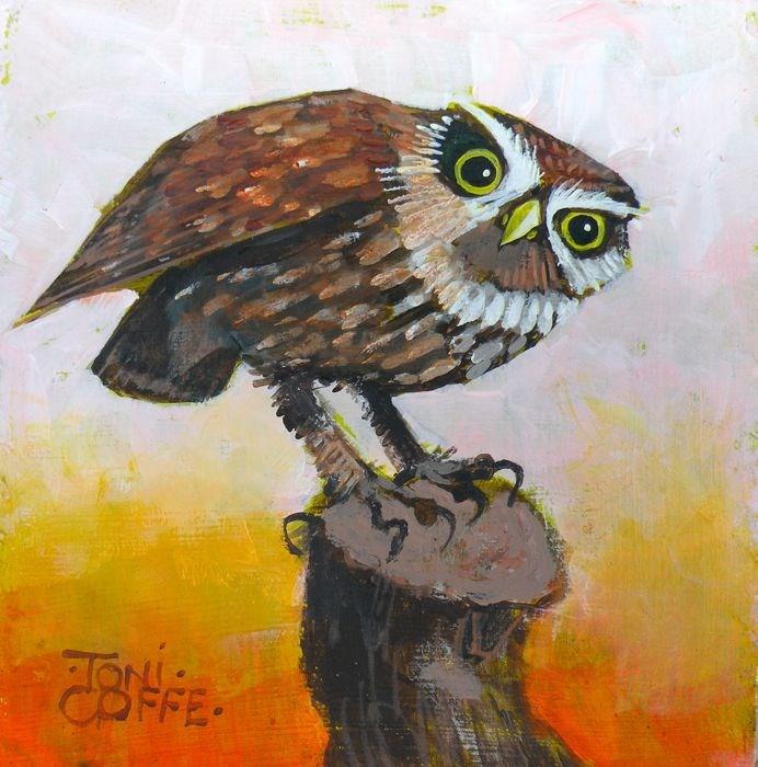 """Little Owl"" original fine art by Toni Goffe"