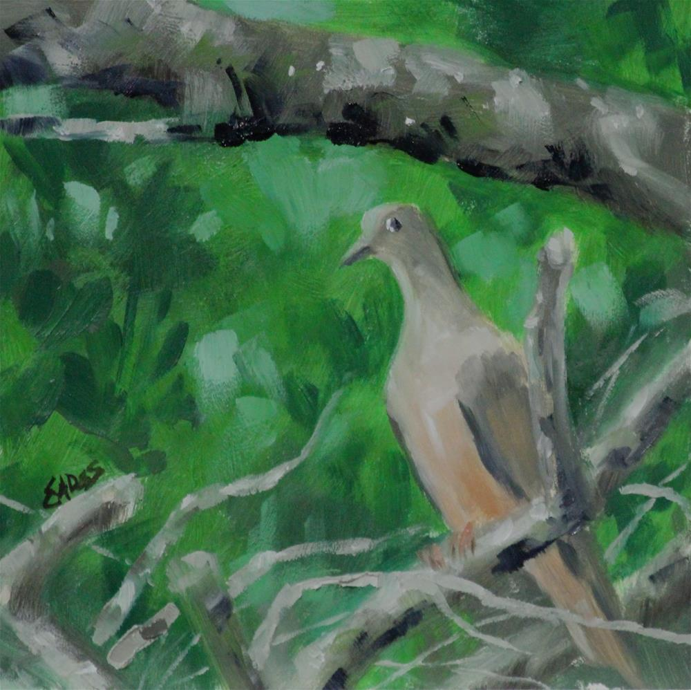 """Morning Dove"" original fine art by Linda Eades Blackburn"
