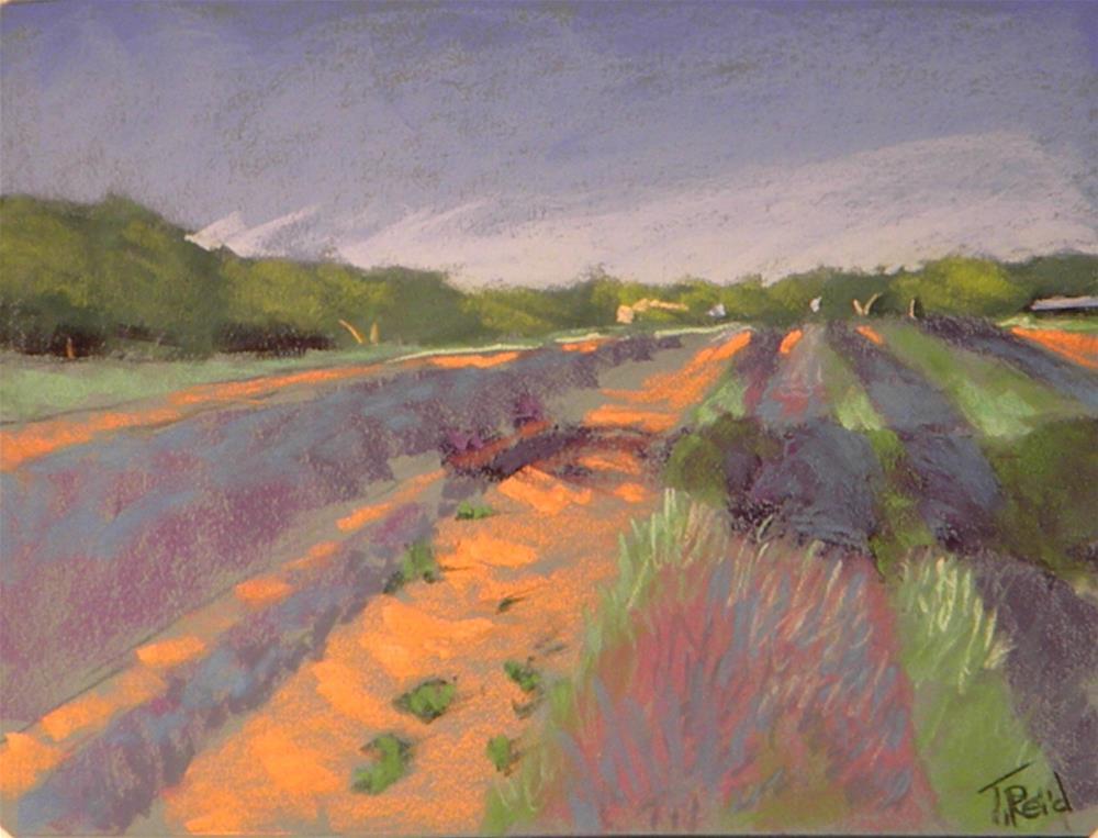 """""""Lavender fields"""" original fine art by Toby Reid"""