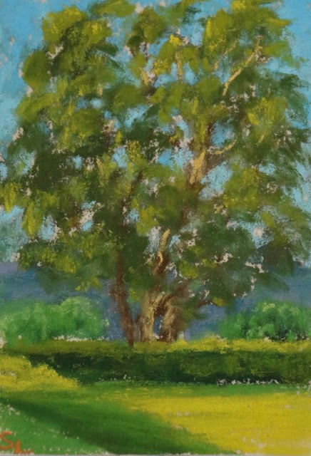 """""""The Light in the Trees"""" original fine art by Sharon Lewis"""