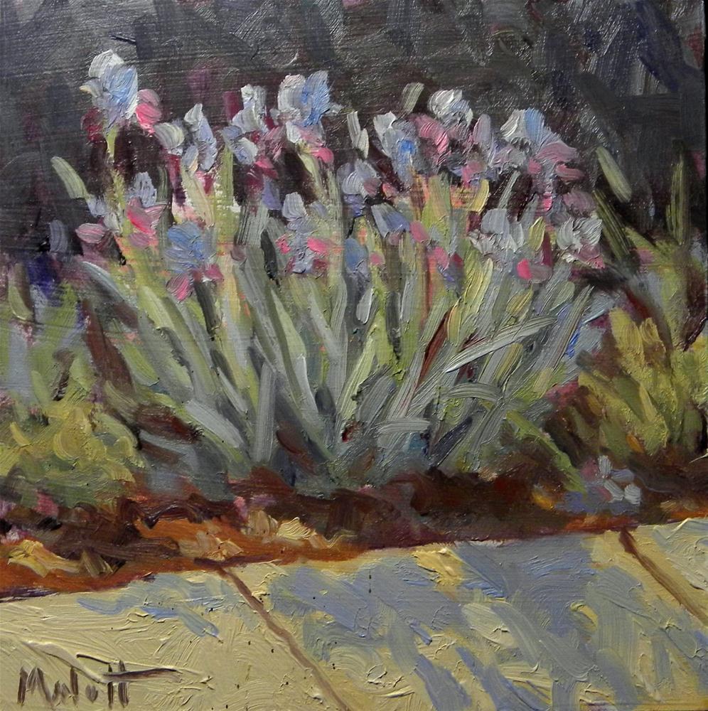 """Bearded Iris special pricing on select paintings"" original fine art by Heidi Malott"