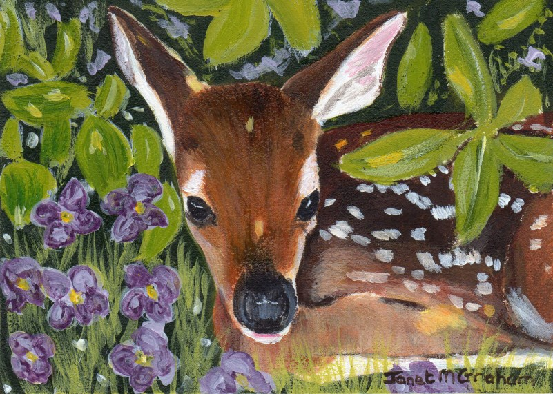 """Little Fawn ACEO"" original fine art by Janet Graham"
