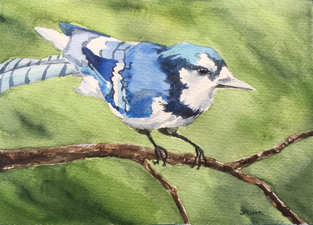 """Young Blue Jay"" original fine art by Judith Freeman Clark"