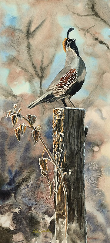 """""""Q is for Quail"""" original fine art by Andy Sewell"""