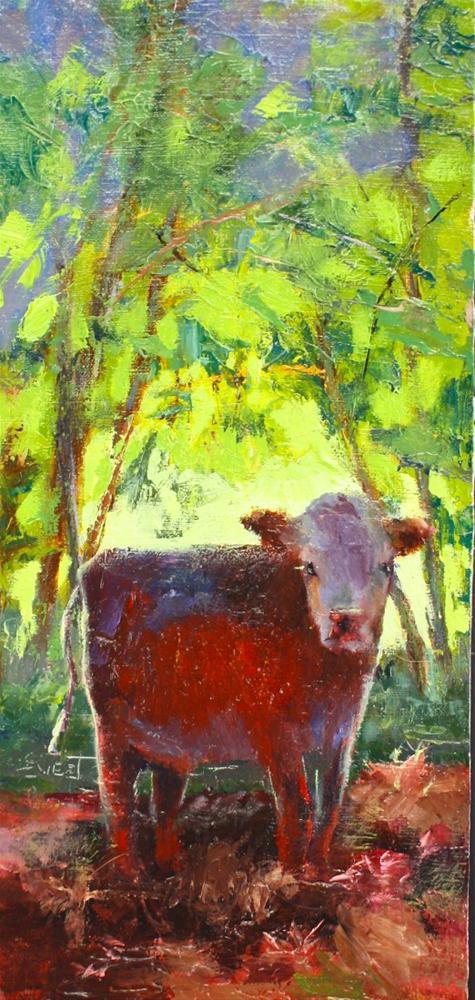 """""""Yearling Hereford"""" original fine art by Pamela Sweet"""