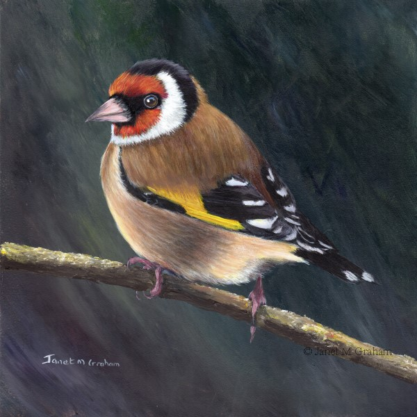 """European Goldfinch No 2"" original fine art by Janet Graham"
