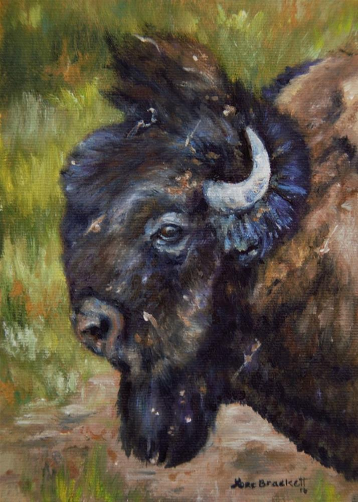 """Bison Study 5"" original fine art by Lori Brackett"