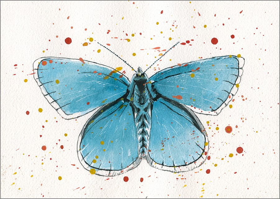 """Adonis Blue Butterfly"" original fine art by Ria Hills"