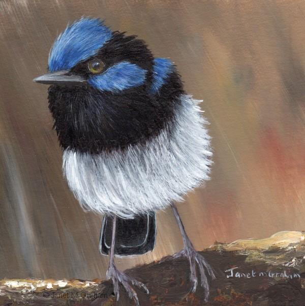 """Superb Fairy Wren No 24"" original fine art by Janet Graham"