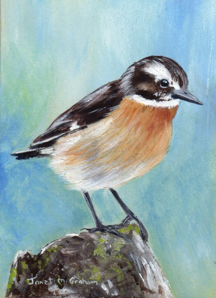 """""""Whinchat ACEO"""" original fine art by Janet Graham"""