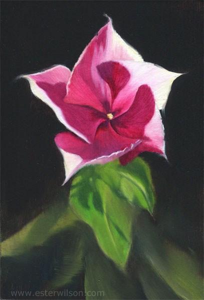 """Star"" original fine art by Ester Wilson"