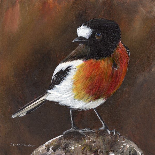 """Scarlet Robin No 8"" original fine art by Janet Graham"