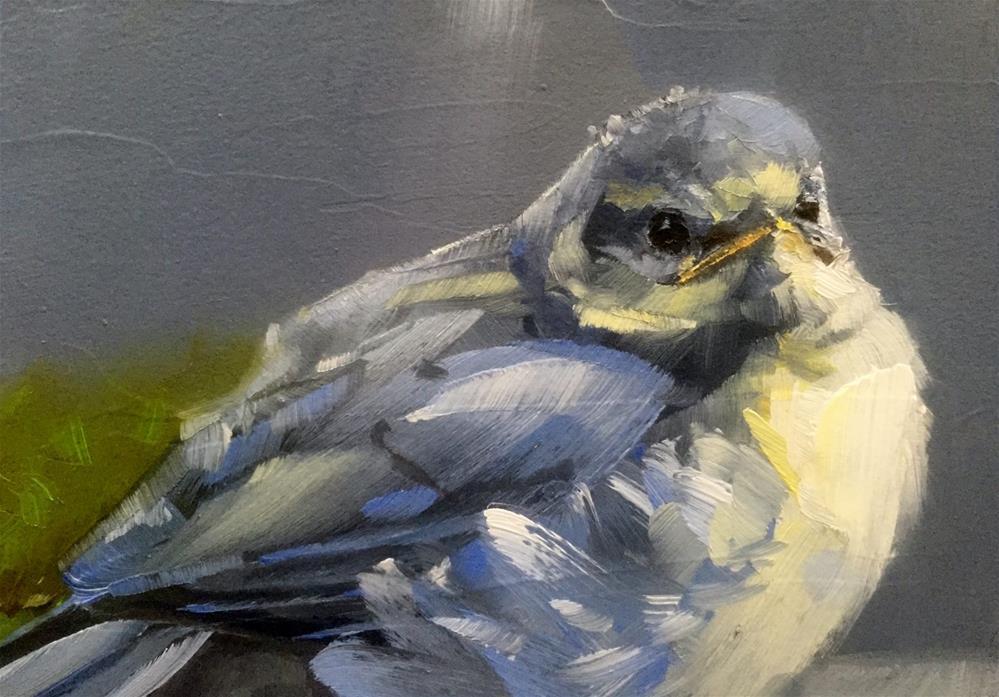 """Young Blue Tit"" original fine art by Gary Bruton"