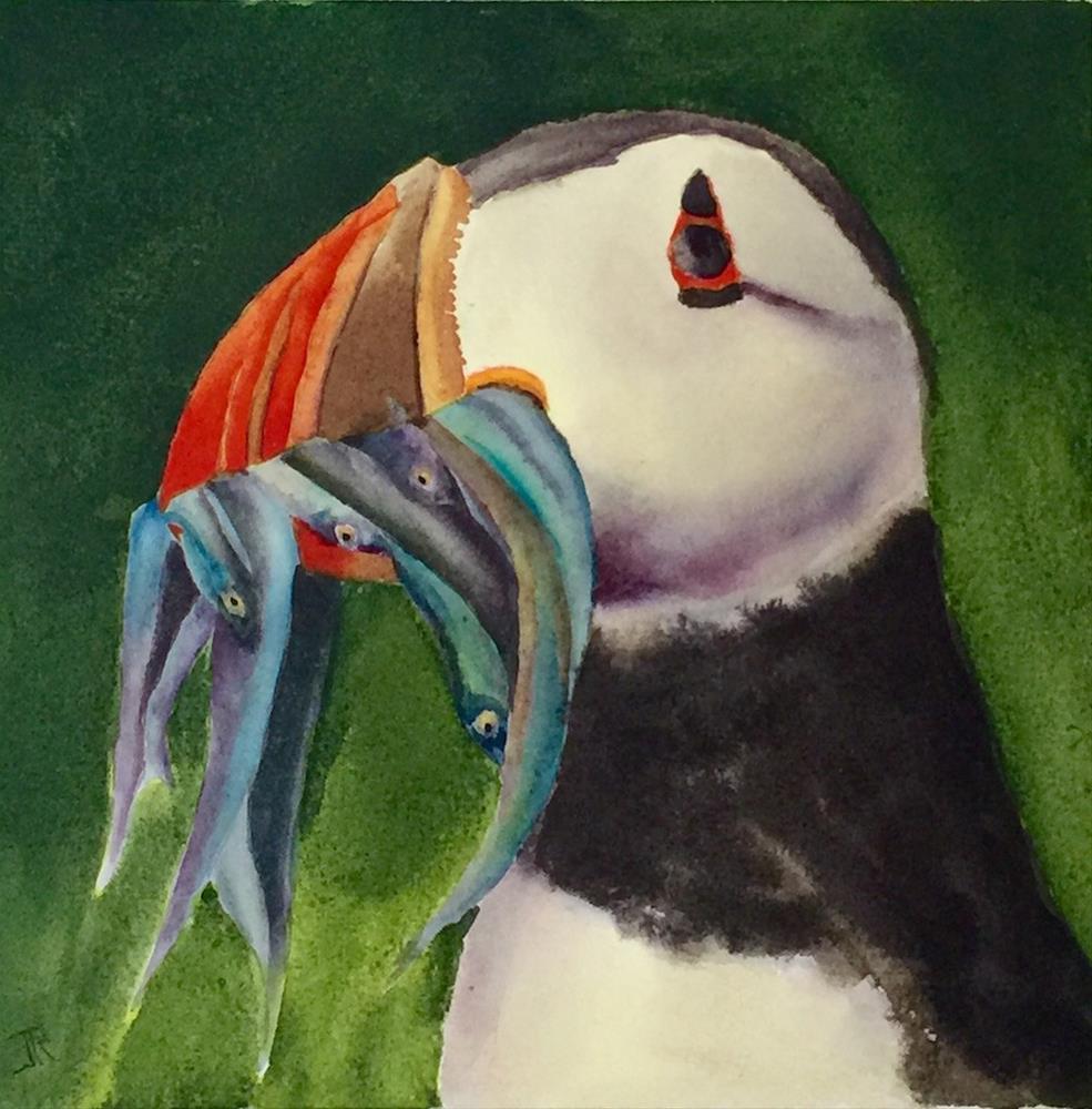 """Proud Puffin"" original fine art by June Rollins"