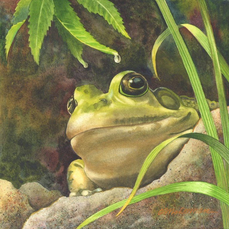 """""""Absolutely Ribbiting"""" original fine art by Connie McLennan"""