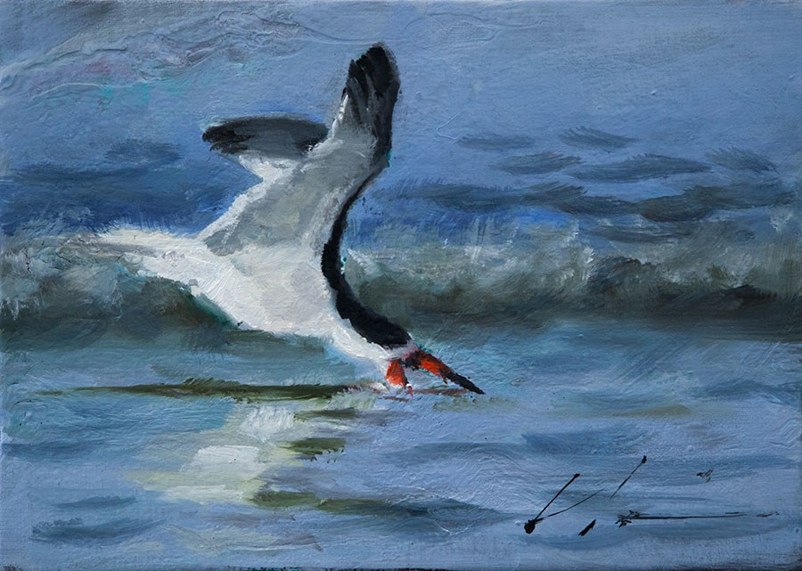 """Skimmer"" original fine art by Clair Hartmann"