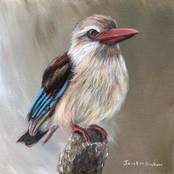 """Brown Hooded Kingfisher"" original fine art by Janet Graham"