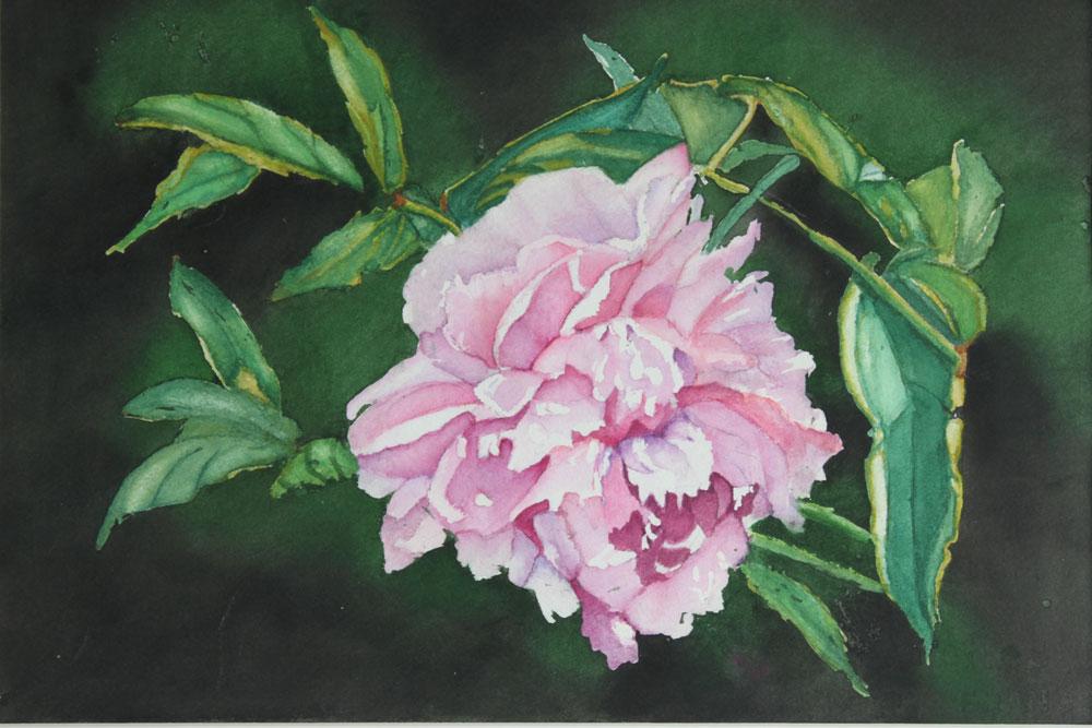 """Pink Peony"" original fine art by Christiane Kingsley"
